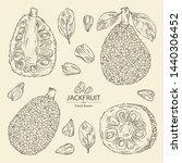 collection of jackfruit  fruit... | Shutterstock .eps vector #1440306452