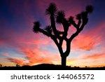 Sunset Over Joshua Tree...