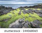 Green Algae On Rocky North...