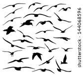 gull silhouette | Shutterstock .eps vector #144068596