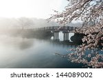 Cherry Tree And Bridge In The...