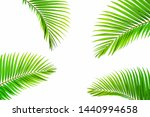 beautiful coconut leaf isolated ... | Shutterstock . vector #1440994658