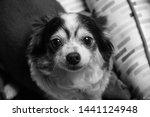 ...   Shutterstock . vector #1441124948