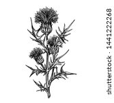 Thistle Branch With Three...