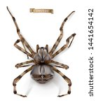 spider. 3d realistic vector icon   Shutterstock .eps vector #1441654142