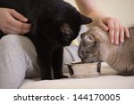 Stock photo unrecognizable woman feeding her two cats at home 144170005