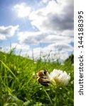 Bee On Clover In Sky