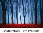 beautiful mystical forest in... | Shutterstock . vector #1441980005