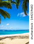 coconut palm tree on the sandy... | Shutterstock . vector #144219682