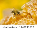 Working Bees On Honey Cells....