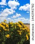 beautiful landscape of... | Shutterstock . vector #1442592782
