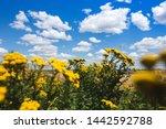 beautiful landscape of... | Shutterstock . vector #1442592788