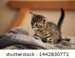 Stock photo cute little kitten on bed caring for pets pet from the shelter for animals 1442830772