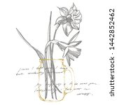 daffodil or narcissus flower...   Shutterstock . vector #1442852462