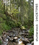 Shallow Mountain Stream In The...