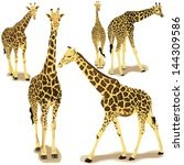 giraffe collection | Shutterstock .eps vector #144309586