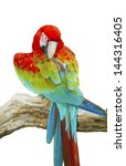 Portrait Of Macaw In Isolated...