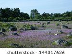 chive wildflowers blossom in a...