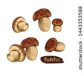 mushroom boletus hand drawn... | Shutterstock .eps vector #1443353588