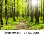 Trees In A Green Forest In...