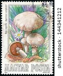 Small photo of HUNGARY - CIRCA 1984: stamp printed in Hungary (Magyar) shows group of field or meadow mushrooms (agaricus campester); edible mushrooms series, photogravure, engraved, Scott 2876 A759 2fo, circa 1984