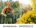 Garden Plants Insecticide by Caucasian Professional Gardener. Spring Time Backyard Maintenance. - stock photo
