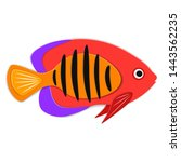 reef fish in paper art style.... | Shutterstock .eps vector #1443562235