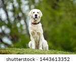 Stock photo portrait of beautiful dog breeds 1443613352