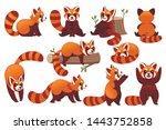 Set Of Cute Adorable Red Panda...