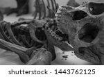 Monochrome Human Skeleton...