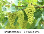 Grapes With Green Leaves On The ...