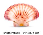 Sea Shell An Isolated On White...