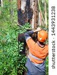 Arborist Securing Rigging Rope...