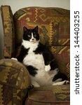 A Fat Cat Sits Back In Recliner ...