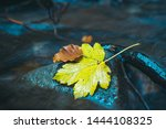 Yellow Maple Leaf On A Stone...