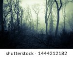A Spooky Forest On A Misty Day...