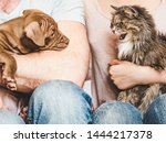 Stock photo young charming puppy and cute cat on the lap of their owners close up white isolated background 1444217378