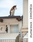 Dog On The Roof Watching The...