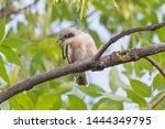 amazed nestling of red backed... | Shutterstock . vector #1444349795