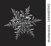 snowflake on black background.... | Shutterstock .eps vector #1444485542