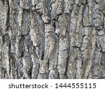 natural old wood background... | Shutterstock . vector #1444555115