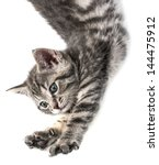 Stock photo little kitten playing on a white background 144475912