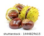 Horse Chestnuts Isolated On...