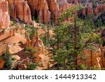 Bryce Canyon Scene With...