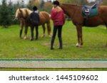 girls preparing to go horseback ... | Shutterstock . vector #1445109602
