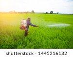 thai farmer spraying...
