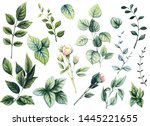 Set Of Watercolor Green Leaves  ...