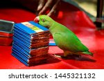 Parrot Astrology In India...