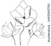 vector magnolia foral botanical ... | Shutterstock .eps vector #1445345705
