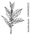 laurel branch  laurus nobilis l.... | Shutterstock .eps vector #1445403515